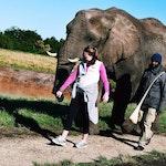 Walking alongside elephants  kateleahy leadabroadlife