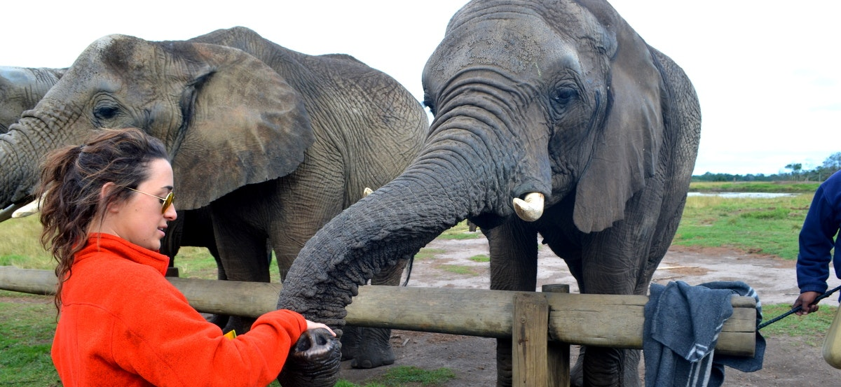 Feeding Elephants on the Garden Route