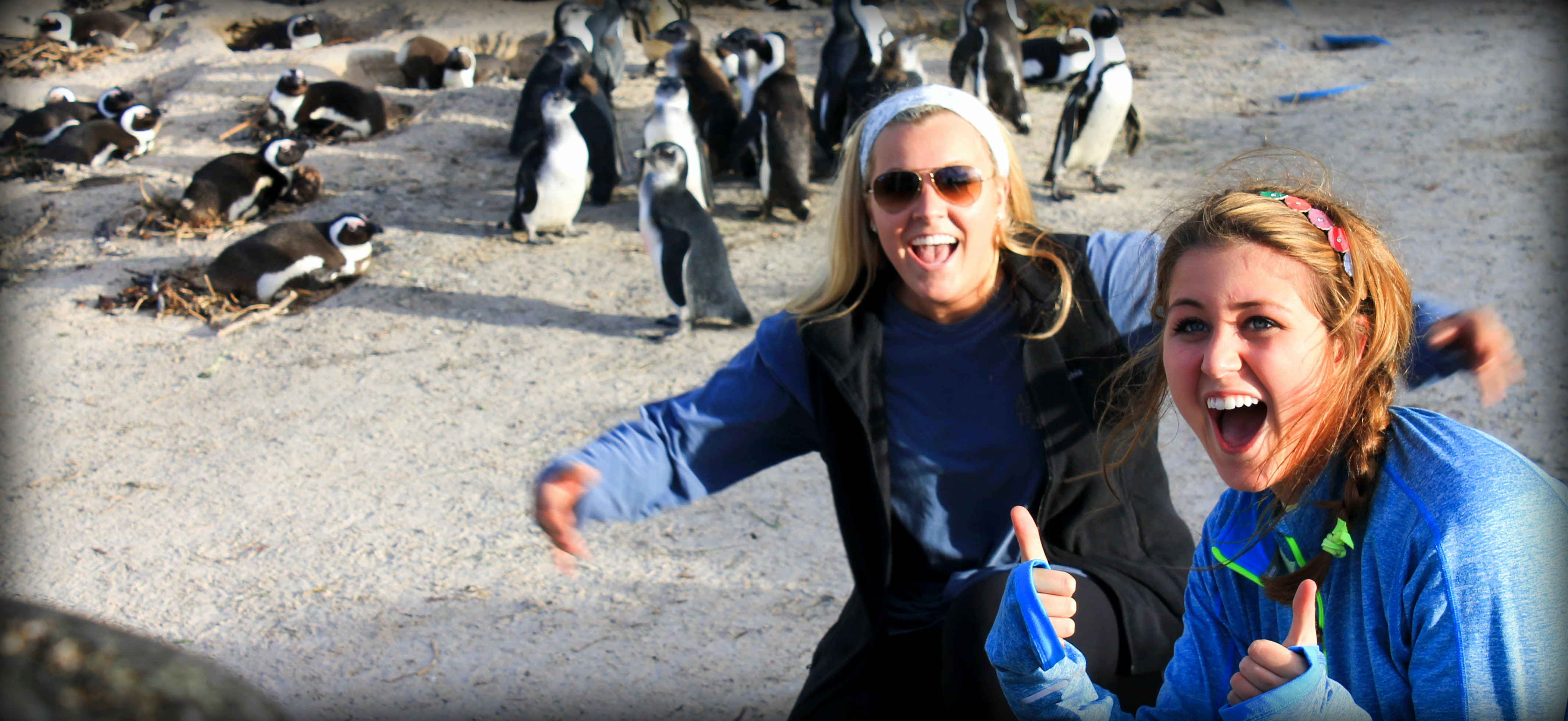 Students hanging with penguins at Boulders Beach