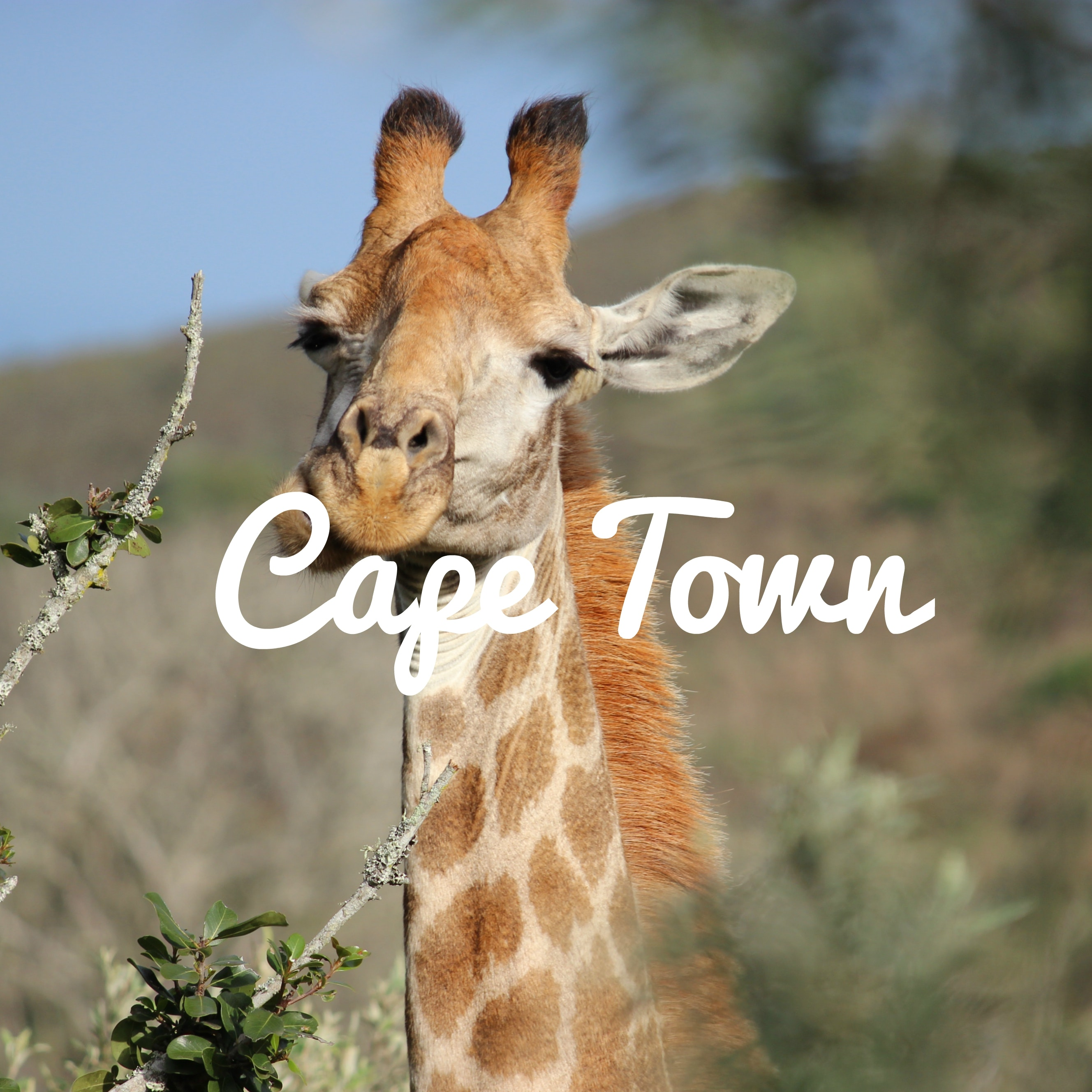 DIRECT Cape Town