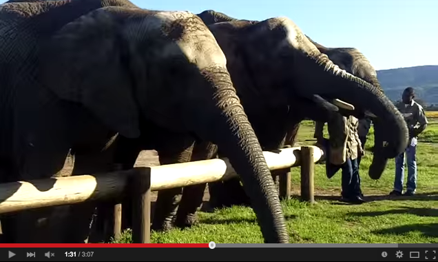 Feeding elephants in Cape Town